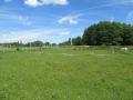 2016_06_20 Kandel Pferde Freckenfeld 03