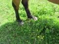 2016_06_20 Kandel Pferde Freckenfeld 07