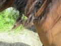 2016_06_20 Kandel Pferde Freckenfeld 10
