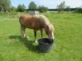 2016_06_20 Kandel Pferde Freckenfeld 32