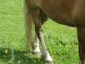 2016_06_20 Kandel Pferde Freckenfeld 33