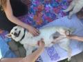 2017_05_19 Alsfeld beh Hunde 7