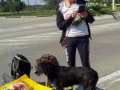 2017_10_02 Vladimirescu Walk the dog 06