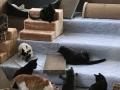 2017_12_28 Alsfeld Katzen Smeura 02