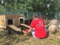 2018_07_24 Alsfeld 1 - Kaninchenrettung Rumänien 05