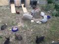 2018_07_24 Alsfeld 1 - Kaninchenrettung Rumänien 12