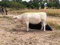 2018_07_31 Ludwigsau besucht Lebenshof für Nutztiere 06