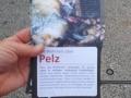 2018_10_17 Mela Peta Pelz 3