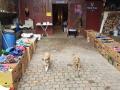 2018_11_24 Tierschutzflohmarkt 01