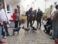 2018_11_24 Tierschutzflohmarkt 17