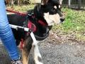 2019_01_28 Alsfeld Rolli-Hunde 3