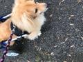 2019_01_28 Alsfeld Rolli-Hunde 5