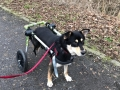 2019_01_28 Alsfeld Rolli-Hunde 6