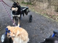 2019_01_28 Alsfeld Rolli-Hunde 7