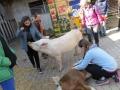 2019_04_13-Glarnerland-Bauernhofaktion-09