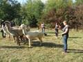 2019_09_17-Lamas-Alpakas-besuchen-15