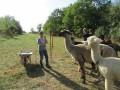 2019_09_17-Lamas-Alpakas-besuchen-16