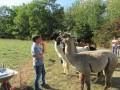 2019_09_17-Lamas-Alpakas-besuchen-17