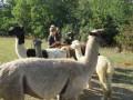 2019_09_17-Lamas-Alpakas-besuchen-19