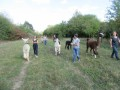 2019_09_17-Lamas-Alpakas-besuchen-22