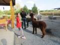 2019_09_17-Lamas-Alpakas-besuchen-26