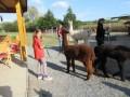 2019_09_17-Lamas-Alpakas-besuchen-27