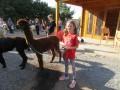 2019_09_17-Lamas-Alpakas-besuchen-29
