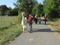 2019_09_17-Lamas-Alpakas-besuchen-36