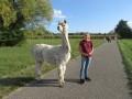 2019_09_17-Lamas-Alpakas-besuchen-38