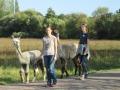 2019_09_17-Lamas-Alpakas-besuchen-48
