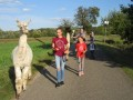 2019_09_17-Lamas-Alpakas-besuchen-49