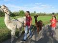 2019_09_17-Lamas-Alpakas-besuchen-50