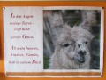 2019_09_17-Lamas-Alpakas-besuchen-68