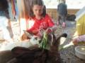 2019_09_17-Lamas-Alpakas-besuchen-71