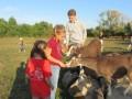 2019_09_17-Lamas-Alpakas-besuchen-77