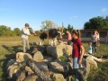 2019_09_17-Lamas-Alpakas-besuchen-78