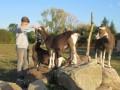 2019_09_17-Lamas-Alpakas-besuchen-81