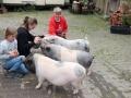 2021_08_26-Schweinefreunde-11