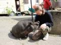 2021_08_26-Schweinefreunde-13