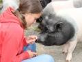 2021_08_26-Schweinefreunde-16