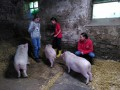 2021_08_26-Schweinefreunde-18