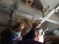 Schüler für Tiere Ludwigsau - Gemeinsam mehr erreichen (Teil 2) 02