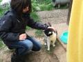 Alsfeld 1 Tierheimtiere  (4)