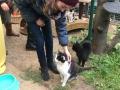 Alsfeld 1 Tierheimtiere  (9)